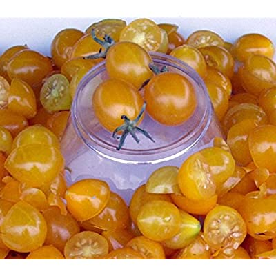 TomatoFest Blondkopfchen Organic Heirloom Tomato Seeds : Garden & Outdoor