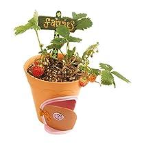 Megableu 678471 - My Fairy Garden - Flowerpot