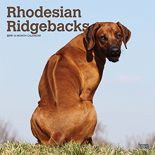 Rhodesian Ridgebacks Wall Calendar, Rhodesian Ridgeback by BrownTrout