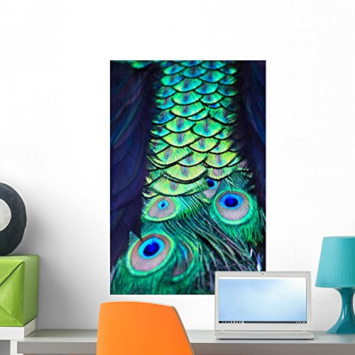 Cheap  Wallmonkeys Textures and Colors Peacock Wall Mural Peel and Stick Graphic (24..