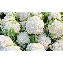 White Cauliflower Igloo - Early Variety - Coated Seeds