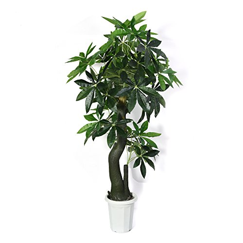 Running Artificial Plant- Artificial Money Tree (51-Inch) with Large Lush Green Leaves - Perfect Decoration Plants for Home, Outdoor or Office - No Water or Sun Needed | Comes with Basin (30W30L160H) by Running