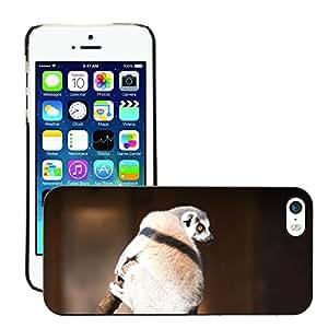GoGoMobile Slim Protector Hard Shell Cover Case // M00124233 Lemur Tree Branch Wildlife Animal // Apple iPhone 5 5S 5G