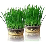 Purr Paw Cat Grass Plants for Indoors (x2) Grow Kits - Just Add Water