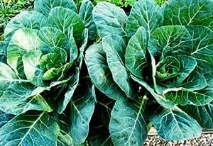 Collard Seeds, Champion, Heirloom Collards, Bulk Seeds, Collard Greens, 500ct