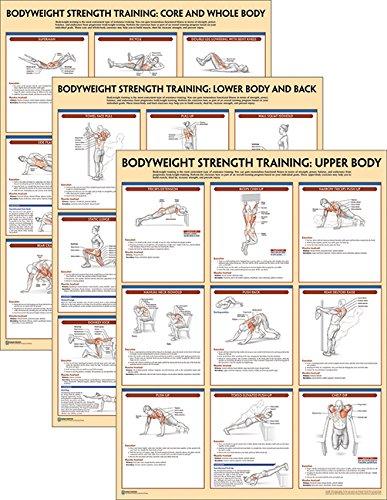 Bodyweight Strength Training Anatomy Poster Series Human Kinetics