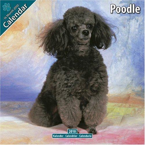 Poodle 2010 Wall Calendar #10061-10