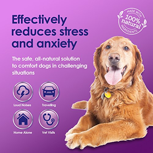 Natural Medicine For Dog Anxiety