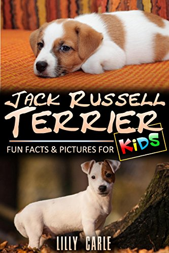 Jack Russell Terrier: Fun Facts & Pictures For Kids - Jack Russell Terrier Puppies Pictures