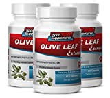 Product review for antiaging antioxidant supplement - Olive Leaf Extract 500MG - brain memory focus - 3 Bottles (180 Capsules)