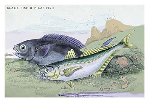 (Blackfish and Pilas Fish 12x18 Giclee On Canvas)