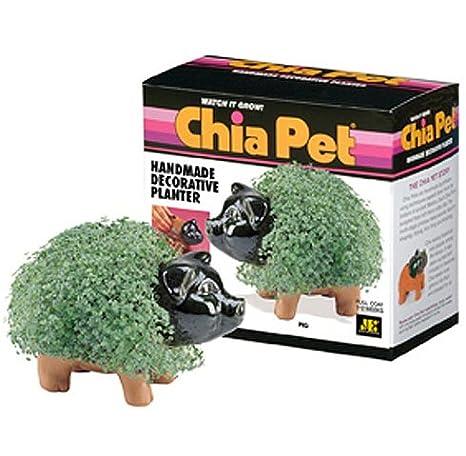 Amazon.com: Chia Pet hecho a mano decorativos planter- Pig ...
