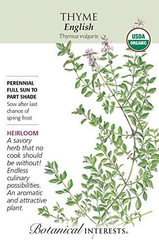English Thyme Seeds - 350 mg - Certified Organic