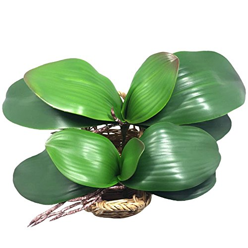 (JAROWN 2 Pcs Artificial Green Phalaenopsis Orchid Leaves Real Latex Touch Plants Arrangement for Flowers Garden Bonsai Decor)