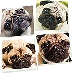 Pug Dog Faces 5 x 5 Super Absorbent Ceramic Coasters, Set of 4