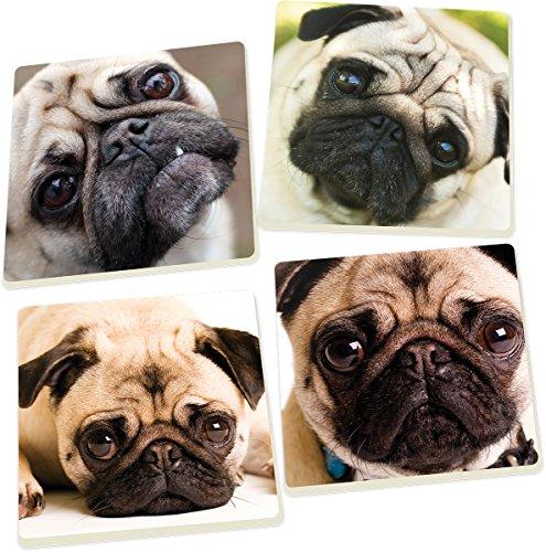 Coaster Pug (Pug Dog Faces 5 x 5 Super Absorbent Ceramic Coasters, Set of 4)