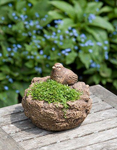 (Campania International P-445-BR Mini Bird Planter, Brown Stone Finish)