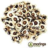 1.000 Sementes de Moringa Oleifera Muitos Benefícios Para Plantio e Mudas