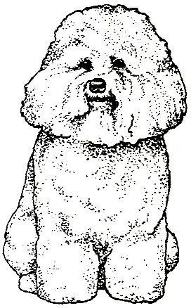 Dog Rubber Stamps - Bichon Frise-1D Size: 1-1/4