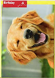 Amazon smiling golden retriever avanti funny dog birthday greeting cards m4hsunfo