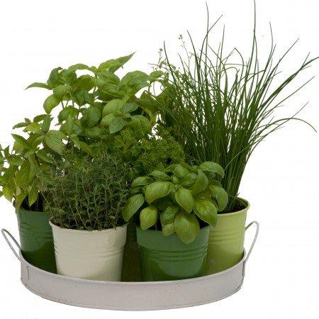 plateau 7 herbes aromatiques - Planter Des Herbes Aromatiques En Jardiniere