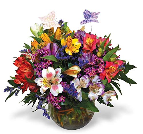 Alstromeria and Butterflies by Moravian Florist - Fresh Flowers Hand Delivered in Staten Island Area