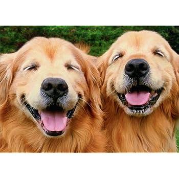 Amazon Com Smiling Golden Retriever Avanti Funny Dog Birthday