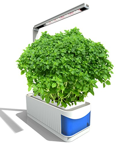 Growing Herbs Under Led Lights - 8