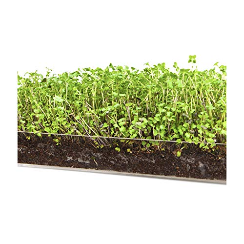 "(Microgreen Salad 3 Pack Refill – Pre-measured Soil + Seed, Use with Window Garden Multi-Use 15"" x 6"" Planter Tray. Contains High Levels of Sulforaphane, a Compound that Protects Cells against Disease.)"