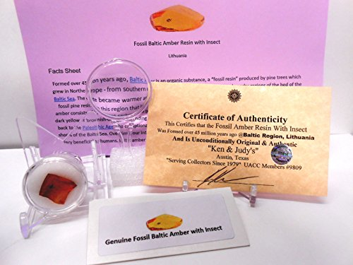 Genuine Fossil Baltic Amber Resin with Insect Inclusion From Lithuania with FREE Magnifying Glass, Acrylic Display Stand, Fact Sheet & COA Bundle. by Rockhound's First Choice Baltic Amber Bundle