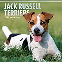 Jack Russell Terriers 2018 12 x 12 Inch Monthly Square Wall Calendar with Foil Stamped Cover, Animals Dog Breeds Terriers (English, French and Spanish Edition)