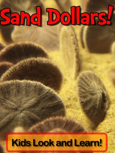 Sand Dollars! Learn About Sand Dollars and Enjoy Colorful Pictures - Look and Learn! (50+ Photos of Sand Dollars)