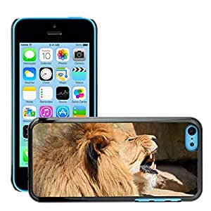 Hot Style Cell Phone PC Hard Case Cover // M00130953 Lion Lioness Wildlife Hunter Animal // Apple iPhone 5C
