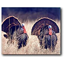 Pair Of Wild Turkeys Animal Bird Hunting Wall Decor Art Print Poster (16x20)