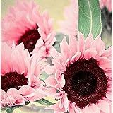 LANDUM Adorable Flower Fragrant Fragrant Blooms Garden Yard Sunflower Seeds (Pink)