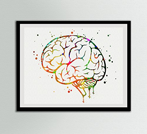 Brain Watercolor Art Prints Brain Anatomy Wall Decor Artworks Wall Art Dining Room Art Wall Hanging Decor House Warming Gift …