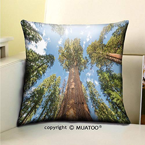PleayeL Soft Canvas Throw Pillow Covers Cases for Couch Sofa -Huge Sequoia Trees in Sequoia National Park California USA Print 16x 16(40 x 40 cm)