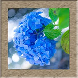 free ship Hydrangea flower seeds, potted bonsai balcony hydrangea 24 colors to choose from, the full range of 40 seeds / pack