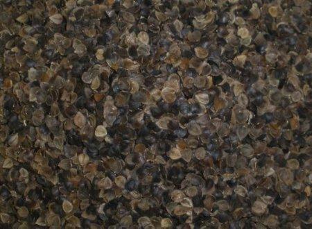 Buckwheat Pillow - Zen Chi Organic Buckwheat Pillow Queen Size (20