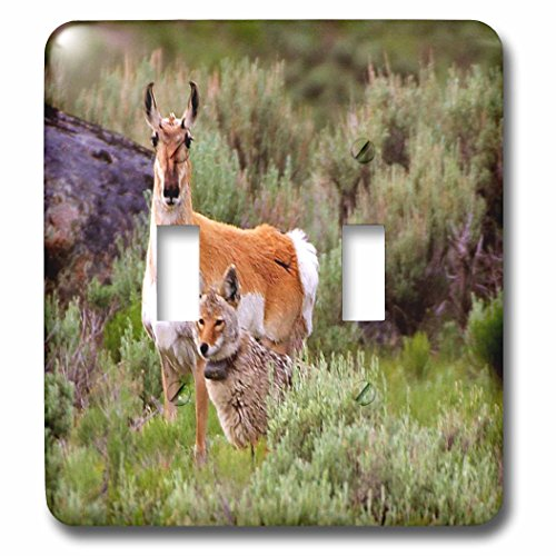 - 3dRose LSP_62362_2 Coyote n Antelope Share The Land Double Toggle Switch