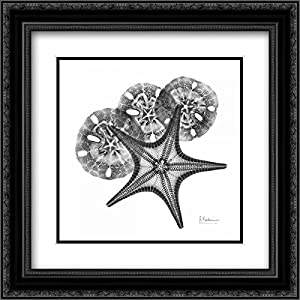 51TOcSRUYqL._SS300_ Best Sand Dollar Wall Art and Sand Dollar Wall Decor For 2020