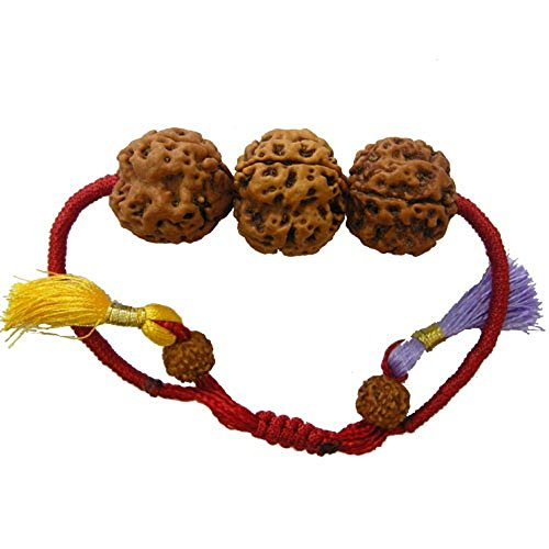 rudraksha-combination-for-career-3712-mukhi-nepal-certified-thread-bracelet