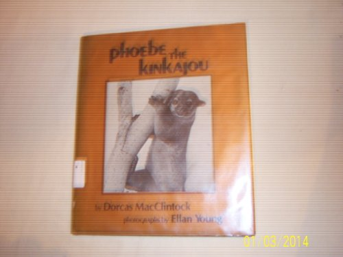 Phoebe the Kinkajou