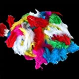 120 Pieces Craft Wild Turkey Tail Wing Feather Mixed Colors 5-10CM