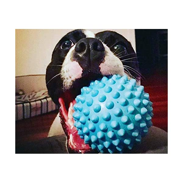 Aussie Dog Soft Catch Ball, Blue, Blue Click on image for further info. 5