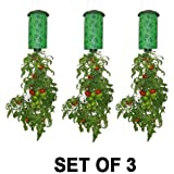 Topsy Turvy Upside-Down Tomato Planter (3-Pack)