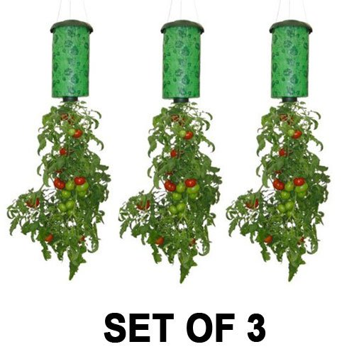 Topsy Turvy Upside-Down Tomato Planter (3-Pack) (Best Cherry Tomatoes For Hanging Baskets)