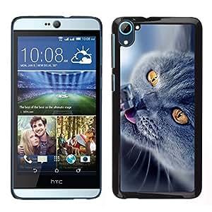 // PHONE CASE GIFT // Duro Estuche protector PC Cáscara Plástico Carcasa Funda Hard Protective Case for HTC Desire D826 / British Shorthair azul /