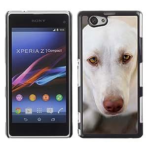 VORTEX ACCESSORY Hard Protective Case Skin Cover - white brown nose Labrador retriever - Sony Xperia Z1 Compact D5503