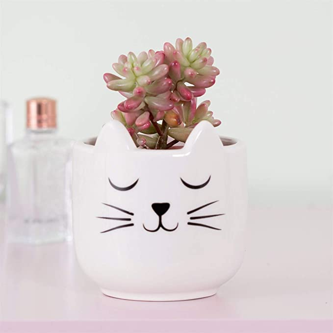 Sass Belle Mini Cat S Whiskers Planter Amazon Co Uk Garden Outdoors